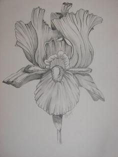 Iris Flower Tattoo Black And White Bearded iris flower tattoo
