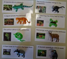 To the Lesson!: Reading Sentences: Animals of South America