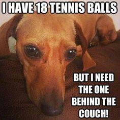 j'ai 18 balles de tennis mais je veux celle qui est derrière le divan !!