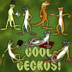 Cool Geckos