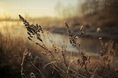 Creative photography by Kevin van der Leek