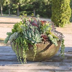 Absolutely Divine Succulent Planter, planted in-house. Absolutely Divine Succulent Planter, planted in-house. Succulent Outdoor, Large Outdoor Planters, Succulent Bowls, Succulent Landscaping, Succulent Gardening, Outdoor Plants, Garden Pots, Outdoor Gardens, Succulent Ideas