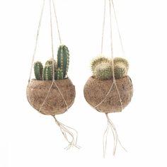 Deze cactus mix in Kokodama geven jouw woon- of slaapkamer direct een gezellige look. Hang ze voor het raam, of fleur er een donkere hoek mee op! #kokodama #cactus #hangplant #plantenhanger #hangpot #planten #kamerplanten #groeninhuis #planteninhuis Cactus Plants, Garden Plants, Garden Rack, Coconut Shell Crafts, Lifestyle Store, Plant Hanger, Planting Flowers, Planter Pots, Projects To Try