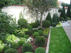 Ogród nie tylko bukszpanowy - część I - strona 24 - Forum ogrodnicze - Ogrodowisko