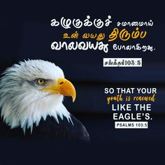 Tamil christian whatsapp status, tamil christian whatsapp dp wallpaper, tamil christian wallpaper HD, tamil christian words image, tamil christian verses wallpaper tamil christian mobile wallpaper, tamil bible wallpaper i strong in the lord christsquare whatsapp status whatsapp dp