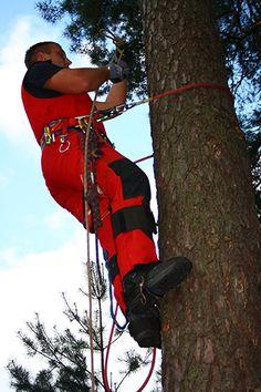 Willkommen beim Baumpfleger aus Eberswalde!!! Ob Baumpflege oder -fällungen, die Baumsäger haben sich auf diesem Gebiet spezialisiert. Unser Team besteht aus qualifizierten Baumkletterern, Baumpflegern und Bodenpersonal - damit können wir Ihnen einen perfekten Rund-um-Service bieten. Für mehr Informationen besuchen Sie unsere Webseite.