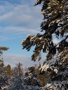 Vår/vinter