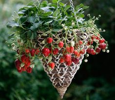 Oh I love this hanging basket! Might have to DIY this too :)