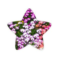 Jared-Windmuller-Photographer-Fine-Art-Wall-Art-Za Star Sticker - flowers floral flower design unique style