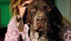 holistic remedies for pets