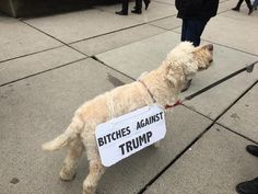 """One of the many signs I saw and photographed during the Seattle 'Women's March,' January 21st, 2017.   On Saturday I spent the better part of the day walking the streets of Seattle with a few of my """"delicate snowflake"""" friends and approximately 175,000 other like-minded women, men and children during our Women's March. The event, which was the largest protest in the history of the city, was by far one of the most powerful and empowering things I have ever personally experienced in my life…"""