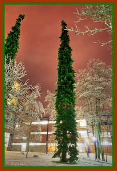 Christmas in Tannenbaum, JYU Library, Finland./Wow they are tall!!G.