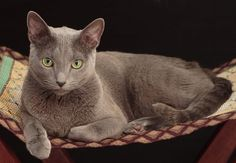 20 Of The Most Expensive Cat Breeds In The World