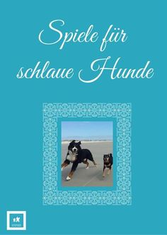Hundebeschäftigung – 30 Tage Challenge Clever Dog Games – The E-Book! Until mid-September there is the e-book for free, so grab it! Clever Dog, Diy Dog Toys, Havanese Dogs, Labradoodle, Dog Games, Dog Crafts, 30 Day Challenge, Happy Dogs, Dog Supplies