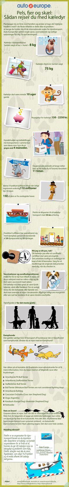 Infographic: Rejs med kæledyr - Find flere af vores infografikker her: http://www.autoeurope.dk/go/infographics/