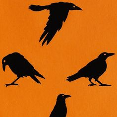 "The many told tales of Crows run from light to dark in their perception. MIDORI's Crows Gift Wrap celebrates the Crow as a symbol of strength in its ""all black everything"" style and self-assured spirit. http://www.midoriribbon.com/gift-wrap-crows-orange/"