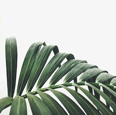 green, plants, and nature image Phone Backgrounds, Wallpaper Backgrounds, Motivational Wallpaper Iphone, Iphone 6 Wallpaper, Plants Are Friends, Poster S, Cute Wallpapers, Planting Flowers, Plant Leaves