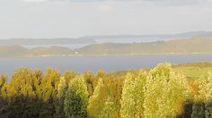 Bosque de canelos y fondo isla Lemuy, isla Quehui y Chaulinec