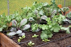 Top Organic Vegetable Gardening Challenges and How to Overcome Them