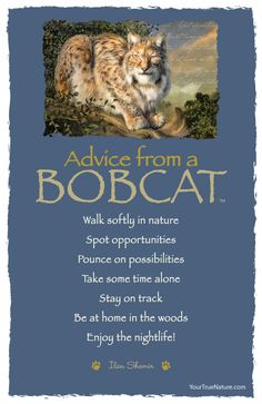 Advice from a Bobcat - Postcard - Your True Nature