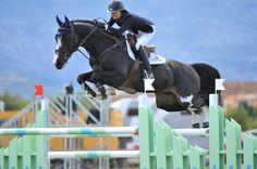 CSI** Mediterranean Equestrian Tour 2 at Oliva Nova Equestrian Center, 7 years class. Barrichello is a 7 year old Dutch-bred stallion from Ashford Farms.