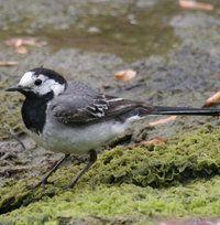 Bergeronnette grise Bird Gif, Pet Birds, Wildlife, Nature, Coin, Facades, Feather, Photos, Birds