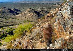 Barrel Cactus Picture 027 - December 20, 2008 from San Tan Mountain Regional Park, Arizona Picture