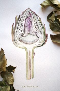 Best Watercolor tattoo - Artichoke Cross Section. Watercolor Botanical Illustration by Elena Limkina. www... Check more at http://tattooviral.com/tattoo-designs/watercolor-tattoos/watercolor-tattoo-artichoke-cross-section-watercolor-botanical-illustration-by-elena-limkina-www/