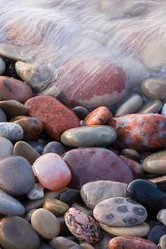 Petoskey Stone (fossilized coral, Hexagonaria percarinata) on Lake Michigan Shore by Ed Post.