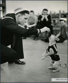 A Coast Guard dog named Salty, 1943 | 40 Precious Dog Photos From The '40s