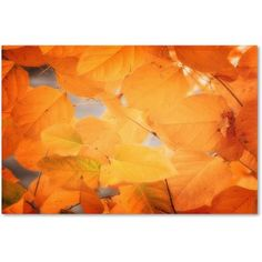 Trademark Fine Art Seasonal Leaves Canvas Art by Philippe Sainte-Laudy, Size: 16 x 24, Multicolor