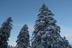 Wake up in Villars-Gryon ! Winter Landscape, Winter Season, Landscapes, Christmas Tree, Seasons, Pure Products, Holiday Decor, Outdoor, Winter Time