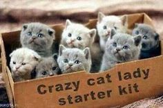 Crazy cat lady starter kit ( box full of kittens animals cat animal kittens kitty animal pictures ) Baby Animals, Funny Animals, Cute Animals, Small Animals, Cute Kittens, Cats And Kittens, Persian Kittens, Crazy Cat Lady, Crazy Cats