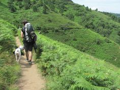 Hiking the Camino de Santiago In Spain With a White Boxer. Outdoor Fun, Outdoor Camping, Walking Holiday, St Jacques, Spain Holidays, The Camino, Saint James, Pilgrimage, Hiking Trails