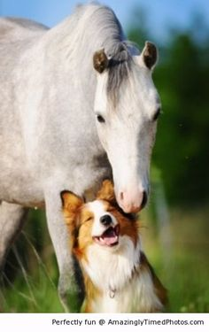 Horses and Dogs are the best animals EVER! You will never find any other animal that is better.