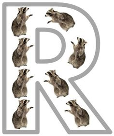 Rr is for Raccoon Printables
