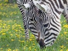 Parco Valcorba - Pozzonovo Amusement Parks, Italy, Animals, Italia, Animales, Animaux, Animal, Animais