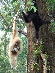 gibbon-family.jpg (226×300)