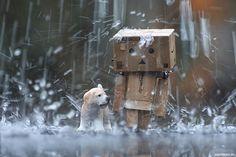 Very beautiful photographs of rain. Very beautiful photographs of rain. Danbo, Rain Wallpapers, Hd Wallpaper, Cold Rain, Robots Characters, Rain Photography, Walking In The Rain, Rain Drops, Rainy Days