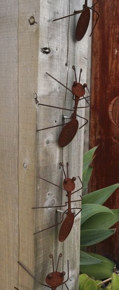 Decorative rusting steel bullants climb the hardwood pergola post. Steven Wells garden at Royal Talbot Rehabilitation Hospital, Melbourne: