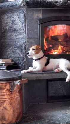 "Via another pinner who said, ""Our sweet Jack Russell Terrier - Ivy""  ~ SO handsome!  This looks a lot like our Atticus, Attie, for short.  :)"