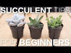 Succulent Tips for Beginners // Garden Answer - YouTube