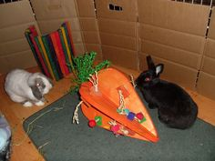 Crazy HUGE Carrot Toys for Bunnies $49.97