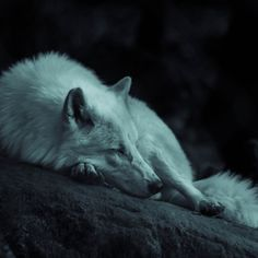 Wolf sleeping in the dark photo by Grégoire Bertaud ( on Unsplash Wolf Images, Wolf Pictures, Amazing Pictures, Animal Pictures, Beautiful Creatures, Animals Beautiful, Animals Amazing, Majestic Animals, Sleeping Wolf