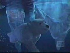 Coca Cola Commercial - Polar Bears #1