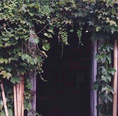 atmosphere from vines