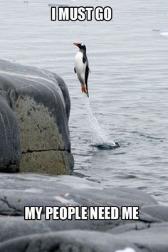 It's a bird! It's a plane! No, it's Super Penguin!