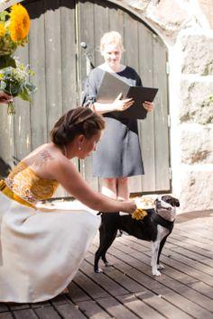 #valokuvaaja #valokuvaajaturku #hääkuvaaja #hääkuvaajatturku #hääkuvaus #wedding #hääkuvaajat #valokuvaajat #valokuvaus #häävalokuvaaja #photography  #wedding2019 #häät2019 #weddinginspiration #haakuvaajat #bride2019 #turku #documentaryweddingphotography #hääyrittäjät #haatlehti #haatFI #weddingphotographer #savethedate #weddingdog #dog #weddingdress #bride #portraitphotography #weddingphoto #ringdog Dogs, Photography, Photograph, Pet Dogs, Fotografie, Doggies, Photoshoot, Fotografia