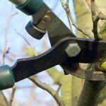 Pro celou skupinu peckovin platí, že řez provádíme na jaře, a to na počátku vegetace. Ideální doba je na začátku kvetení, kdy se nejlépe, a to i bez ošetření, hojí řezné rány a neprojevuje se tak často jako jindy klejotok. Pruning Shears, Garden Tools, Gardening, Gardening Scissors, Yard Tools, Lawn And Garden, Horticulture