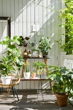 Mit Pflanzen den Sommer feiern Summery flair on the veranda Garden Deco, Balcony Garden, Indoor Garden, Indoor Plants, Outdoor Gardens, Porch Plants, Balcony Plants, Porch Garden, Summer Plants